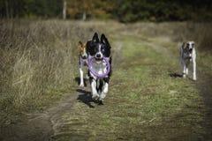 Hunde auf einem Weg im Park Lizenzfreie Stockfotografie