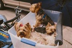 Hunde auf Geschäftemacher 4 Lizenzfreie Stockfotografie