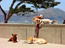 Hunde auf Leinen in San Francisco lizenzfreie stockbilder