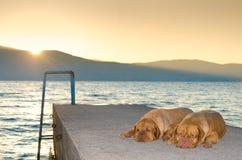 Hunde auf Sonnenuntergangpier Stockfoto