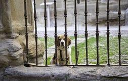 Hunde in den Käfigen stockbilder