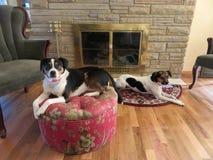 Hunde der Freizeit Stockbilder