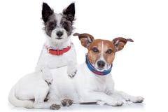 Hunde in der Liebe stockfotografie