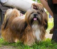 Hunde der verschiedenen Zucht Lizenzfreies Stockbild