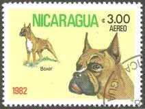 Hunde, deutscher Boxer lizenzfreie stockbilder