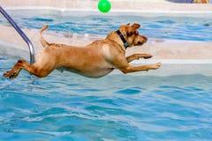 Hunde, die öffentlich Pool schwimmen lizenzfreie stockfotos