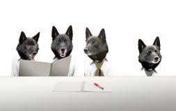 Hunde in der Sitzung lizenzfreie stockbilder