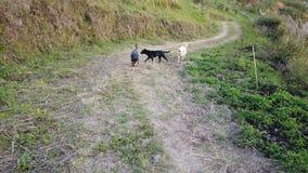 Hunde, die auf Berg gehen stock footage
