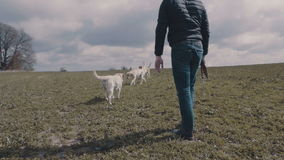 Hunde, die auf dem Feld sich treffen stock video footage