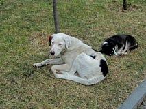Hunde, die auf dem Gras stillstehen lizenzfreie stockfotografie