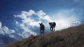 Hunde, die auf dem Horizont laufen Stockfotografie