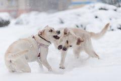 Hunde, die auf dem Schnee spielen Lizenzfreies Stockfoto