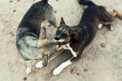 Hunde, die auf dem Strand ausüben Stockfoto
