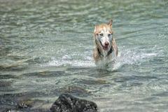 Hunde, die auf dem Strand spielen Lizenzfreie Stockbilder