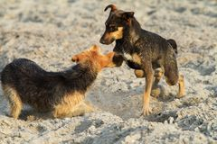 Hunde, die auf dem Strand spielen Stockfotos