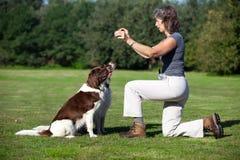 Hunde, die auf ihren Hundekuchen von einer Frau warten Lizenzfreie Stockbilder
