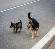 Hunde, die auf Straße spielen Lizenzfreies Stockfoto