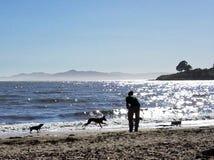 Hunde, die auf Strand spielen Stockfotografie