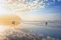 Hunde, die auf Strand spielen und laufen Lizenzfreie Stockfotos
