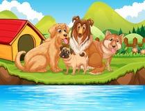 Hunde, die durch den Fluss sitzen Stockfotografie