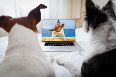 Hunde, die einen Film aufpassen Lizenzfreies Stockbild