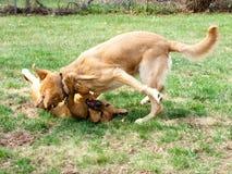 Hunde, die einen sonnigen Tag genießen Lizenzfreie Stockfotografie