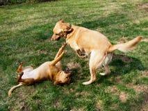 Hunde, die einen sonnigen Tag genießen Lizenzfreie Stockfotos