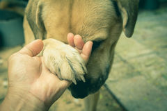Hunde, die Hand mit Menschen, Freundschaft zwischen Menschen und Hunde rütteln Stockbilder