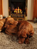 Hunde, die vor dem Feuerplatz sitzen Stockfotos