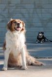 Hunde durch eine getaggede städtische Betonmauer der Graffiti Stockfoto