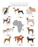 Hunde durch Ursprungsland Afrikanische Hunderassen r lizenzfreie abbildung