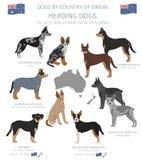 Hunde durch Ursprungsland E r vektor abbildung