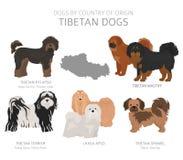 Hunde durch Ursprungsland Tibetanische Hunderassen r lizenzfreie abbildung