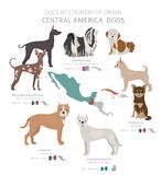 Hunde durch Ursprungsland Zentralamerikanische Hunderassen r vektor abbildung
