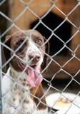 Hunde in einem Käfig Stockfotografie