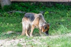 Hunde explodieren lizenzfreie stockfotos