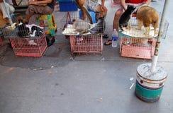 Hunde für das Mittagessen Lizenzfreies Stockfoto