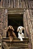 Hunde am Fenster Lizenzfreies Stockbild