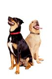 Hunde- Freunde Lizenzfreie Stockfotografie