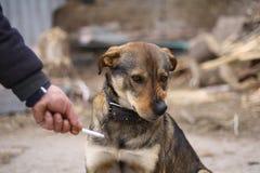 Hunde gegen das Rauchen (für eine gesunde Lebensart) Lizenzfreie Stockbilder