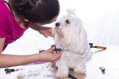 Hunde- Haarschnitt Stockfotos