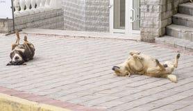 Hunde haben einen Rest Lizenzfreie Stockfotografie