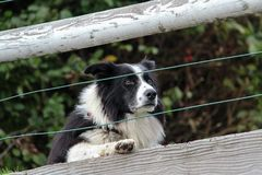 Hunde hinter dem Zaun Stockfotografie