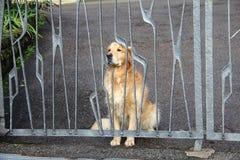 Hunde hinter dem Zaun Lizenzfreies Stockbild
