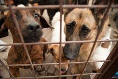 Hunde hinter Gittern Stockbild