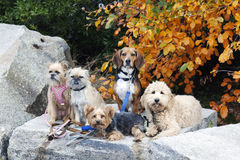Hunde im Park stockfotografie