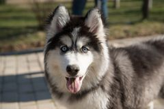 Hunde im Park lizenzfreies stockbild