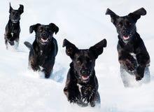 Hunde im Schnee Stockfotos