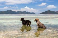 Hunde im See- oder des Indischen Ozeanswasser auf Seychellen Stockbilder