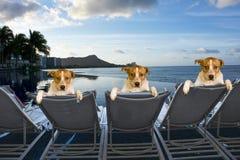 Hunde im Urlaub Lizenzfreies Stockfoto